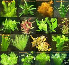 100 Plantes d'aquarium rouges / vertes, 16 bouquets