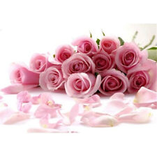 FD702 10 Seeds China Rare Pink Rose Seed For Lover Pink Rose Seed Fresh ~10pcs ✿