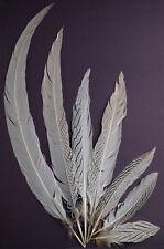 "3 Pcs SILVER PHEASANT Natural Feathers 26-28"" (Craft/Art/Bridal/Halloween/Pads)"