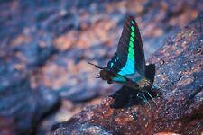 Photo image 100% positive picture Sri Lanka beautiful butterfly