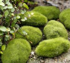 FD2192 Stone Moss Miniature Dollhouse Garden Craft Fairy Bonsai Plant Decor x1✿