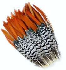 "10 Pcs LADY AMHERST PHEASANT Feathers 4-12"" RED TIP Top Quality/Craft/Hats"