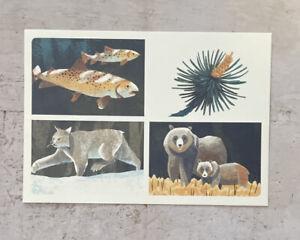 Postcard ~16x11.5cm USA National Parks Yellowstone Bear Lynx Fish