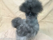 "8 + Bearded Silkie Hatching Eggs Assorted Colors  ""NPIP"""