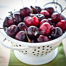 20x Hot Cherry Seeds Organic Seeds Fruit Seeds Bonsai Tree Seeds Home Garden US