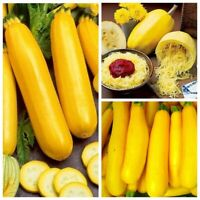 Seeds Squash Zucchini Zolotynka Spaghetti Giant Vegetable Organic Heirloom