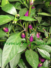 VEGETABLE  HOT CHILLI PEPPER NUMEX CENTENNIAL  80 FINEST SEEDS