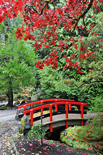 STUNNING JAPANESE GARDEN LANDSCAPE CANVAS #351 QUALITY FRAMED PICTURE WALL ART