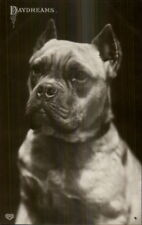 Boxer? Dog Close-Up c1910 Real Photo Postcard DAYDREAMS