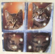 Cute Tabby Cats In Snowy Window Christmas Cards Pack of 10  ~100% for Charity~