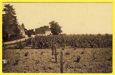 cpa Rare 37 - SAINT MARTIN le BEAU Domaine de MOSNY CHÂTEAU Vignes