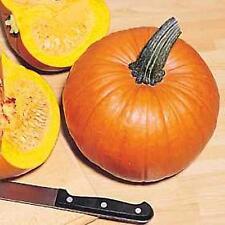 Pumpkin Jack O Lantern Vegetable Seeds