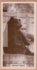 Brown Bear 1920s Ad Trade Card