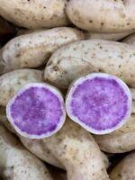10 sweet potato Slips - cuttings /white and purple sweet potato Plants/ Okinawa