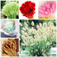 100 Pcs Seeds Grass Bonsai Bunny Tails Lagurus Ovatus Tropical Plants Flowers Y
