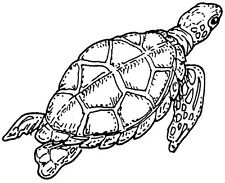 Unmounted Rubber Stamps,  Sea Turtles, Endangered Species, Nature,  Sea Turtle