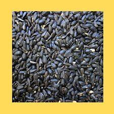 12.55kg Black Sunflower Seed Wild Bird Food - High Oil