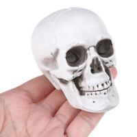 Human Skull Decor Prop Skeleton Plastic Head Halloween Coffee Bars Orname BRPF