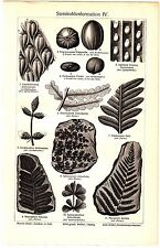ca 1890 PREHISTORIC PLANTS FOSSIL Antique Engraving Lithograph Print
