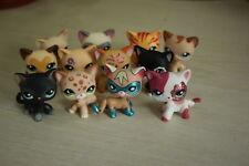LPS Toys 3pcs random RARE Littlest Pet Shop Short Hair Cat Kitty Girl gift kitte