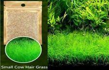 Aquarium Grass Seeds (Small Cow Hair Grass) Aquarium plant <Usa Free Ship>