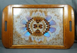 Vintage 1960's Brazilian Butterfly Tray Sealed under Glass Inlay Border