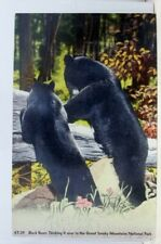 Great Smoky Mountains National Park Black Bears Postcard Old Vintage Card View