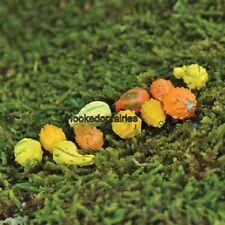 Miniature  Gourd Set of 11 Dollhouse GO 16822  Fairy Garden Dollhouse Terrarium