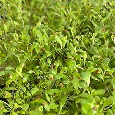 MicroGreens Sprouting & Vegetable Seeds USDA/TOC Organic - Non GMO