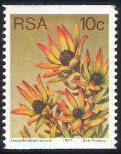 RSA 1977 10c Coil/Sun Conebush/Flowers/Succulents/Cacti/Nature 1v (n21740)