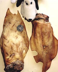 Beef Cow Ears. Huge w Scroll 200 Australian. Treat Chew Pet Dog. Alt 2 Pig Ears