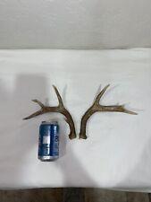 Antler Wild Whitetail Deer 4X4 Set!Knife~Decor~Mount~Tro phy~Elk~Sheds~Moose~Lot