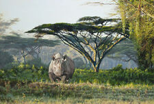 """Guy Combes """" Anguruok """" Limited Edition Giclee Canvas African Rhino"""