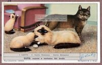 Abyssinian Cat Gatto Abissino and Birman Birmano Cat Chat c60  Y/O Trade Ad Card