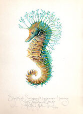 original SHORTHEAD SEAHORSE (Deux) Limited edition signed handworked print