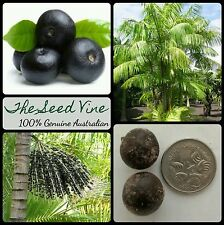5 ACAI BERRY PALM SEEDS (Euterpe olarecea) Rare Superfood Fruit Edible Tropical