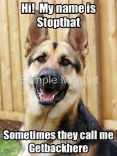 "GERMAN SHEPHERD My Name is Stopthat Funny Dog Fridge Magnet 4"" x 3"""