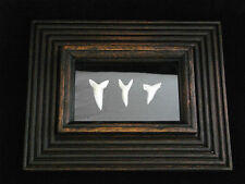 PICTURE FRAME MAKO SHARK TOOTH JAWS THE MOVIE COLLECTION DISPLAY REAL TEETH pf-2