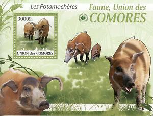 Comoros Wild Animals Stamps 2009 MNH Red River Hogs Bush Pigs Fauna 1v S/S