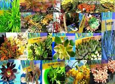 Succulent  Mixed Variety 40 different Cuttings Starter Packs $52 Free Post