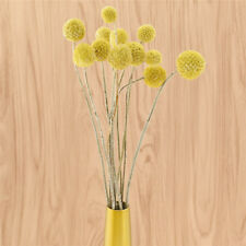 10pcs Dried Natural Craspedia Flower Single Yellow Balls Floral Home Decor