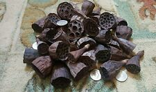 12 Mini Dried Hand-Picked Natural Lotus Pods For Crafts,Floral Decoration