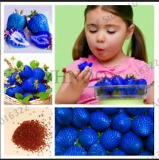 300 PEZZI Semi Blu Arrampicata FRAGOLA piante bonsai giardino albero frutta biologica N