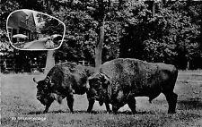 BG15256 holzmuhle bei eldagsen am saupark bison bizon  germany CPSM 14x9cm