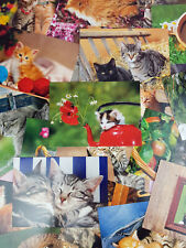 30 Postkarten mit Katzenmotiv Katzenkarten Ansichtskarten Katzen Kätzchen