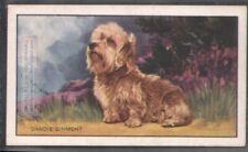 Dandie Dinmont Dog 75+ Y/O Ad Trade Card