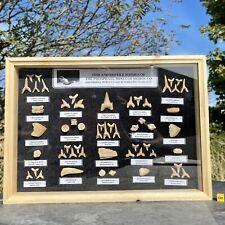 More details for fossil shark collection display box gift fsr814 ✔100% genuine ✔uk seller