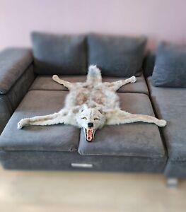 taxidermy wolf skin.  faux fur