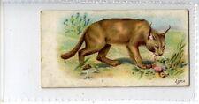 (Jd8111) WILLS,WILD ANIMALS OF THE WORLD,LYNX,1900,#