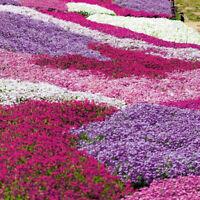 100Pcs Mixed Color Phlox Paniculata Seeds Hummingbird Flower Yard Decor Newly